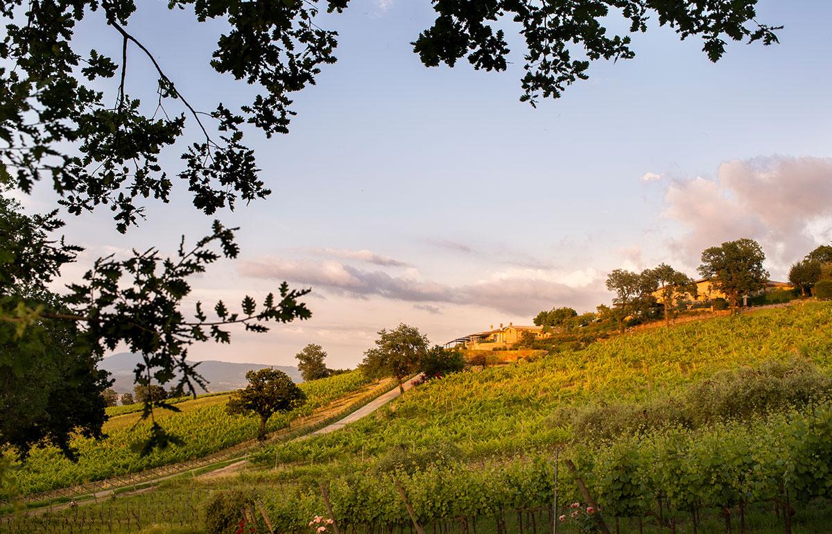 wineresort_homepage3